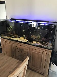 Custom Made Aquarium 5.5ft x 1.5 x 2 Inglewood Stirling Area Preview