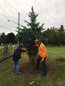 Specimen trees , Planting, Landscaping! Best time to plant !