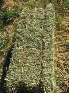 Square hay bales ( second cut)
