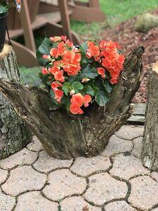 Natural wood creations