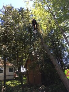 Tree removal- storm clean up