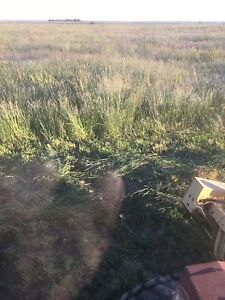 Standing hay grass for sale cheap