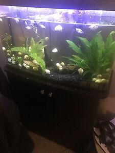 23 Gallon Fluval Vista Aquarium & Stand