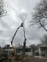 TREE SERVICE. OUR BACKYARD LIFT FIT THROUGH ANY GATE. 5199197096
