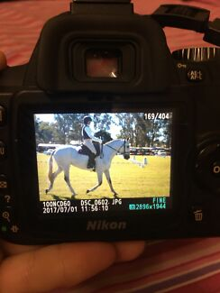 Equine photography ( and other )