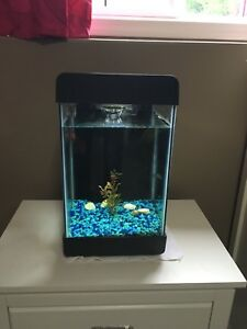 5 gallon fish tank with usb and phone holder