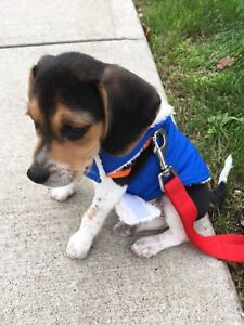 LOOKING TO ADOPT A PUPPY!!!
