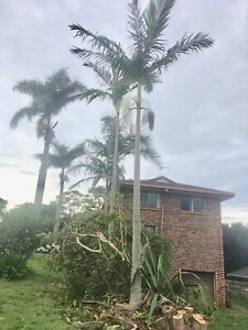 45 year old  Four Storey High Alexander Palms Banora Point Tweed Heads Area Preview