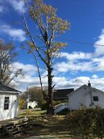 Tree Removals and Pruning- Timber Tree Experts
