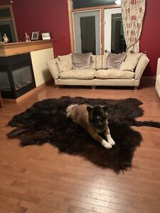Soft Tanned Black Highland Cow Hide