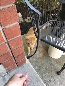 Spotted potentially missing cat