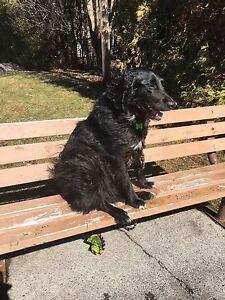 Dog Walker / Cat Sitter  / Cage-Free Boarding