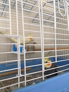 Birds and parrot for sale