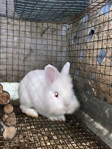 Rabbits with cage , acces. and organic food inc.