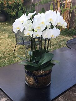 Wanted: Real orchids