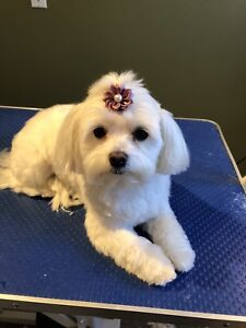 Ashley's Happy Tails Grooming (Dog Groomer)