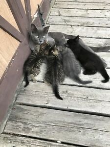 5 Kittens looking for a good home