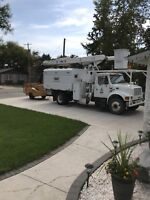 TREE REMOVAL, Free Quotes LICENSED & INSURED