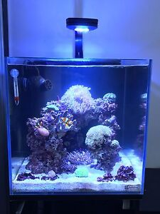 Marine reef fish tank. Eveleigh Inner Sydney Preview