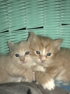 2 Kittens left (female and male)