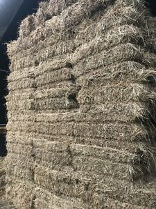 First cut small Square hay bales
