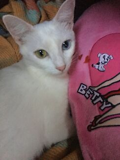 Beautiful White Cat for sale