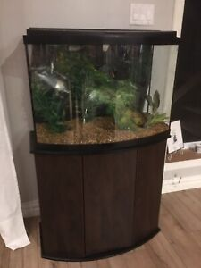 35 gal curved front fish tank with stand like new