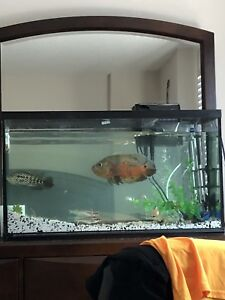 Fish tank with 2 large fish