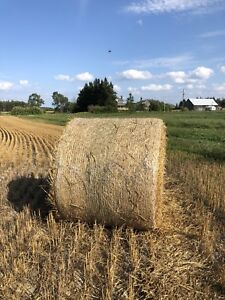 Wheat Straw - 4x5 round bales for sale