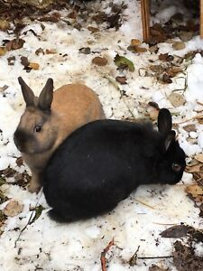 Bunnies to a new home