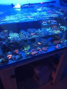 Corals for sale