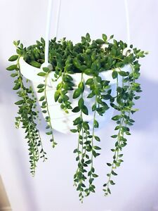 String of Beads (String of Pearls)