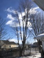 Tree & Limb Removal & Stump Grinding Service Free Quote Insured