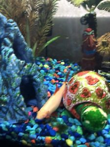 Fish and tank decorations