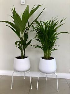 Indoor plants potted with stands, $60 each firm