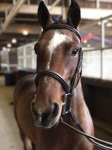Canadian Sport Pony