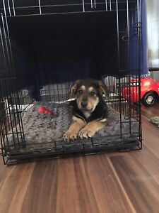 Large dog crate with insert (pup not included)