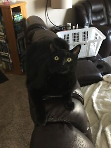 Have you seen me? Lost cat