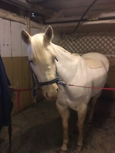 2009 Quarter Horse mare for sale