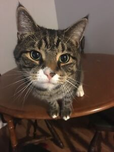 Looking for friendly cat under 4 years old