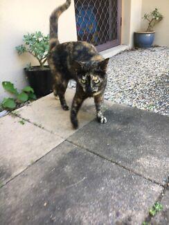 Family cat needs new home