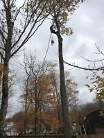 Tree Removal & Stump Grinding Services Free Quotes