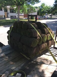 Sod/grass for sale