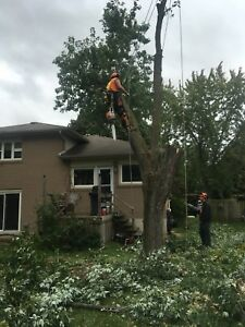 Tree service/ removal-trimming/