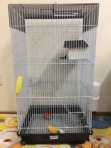 PET young male rat for sale! Metford Maitland Area Preview