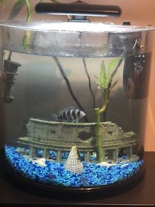 Whole set of 10 gallon fish tank for sale