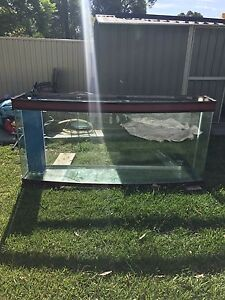 Large Curved Face Reptile Tank/Marine Tank/Freshwater Tank Padstow Bankstown Area Preview