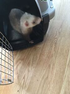 Ferret for free please read