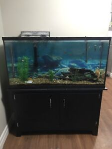60 Gallon Fish Tanks & Accessories!!