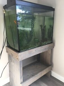 Fish, fish tank and everything you need!!